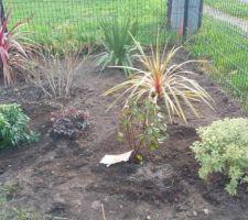 Arbustes et plantes