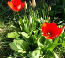 Le printemps est déjà là