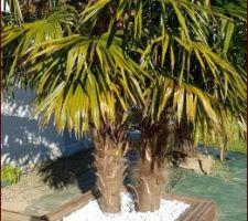 Création d'un support pour intégrer les pieds de palmiers