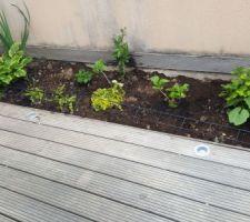 Reservation/ jardinière