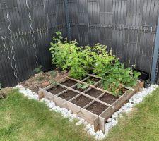 Potager: tomates cerise, framboisier, fraisier, rhubarbe