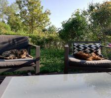 Les chats au soleil...