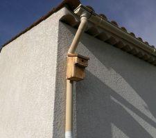 Boite nids pour mésange charbonnière à louer gratuitement, bail libre