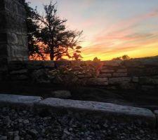 Camélia avec le coucher de soleil