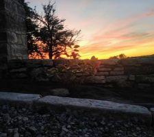 Camélia au coucher de soleil