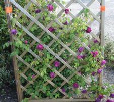J'ai profité du confinement pour poser les treillis supportant les rosiers arbustifs pour celui ci situé dans le couloir à vent du jardin j'ai doublé le spoteaux avec des piquets d efer de chantier la végétation devrait couvrir l'ensemble  enfin j'espère !