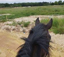"""Et voilà juste pour le fun je suis allée voir """"mon"""" terrain avec mon cheval..."""