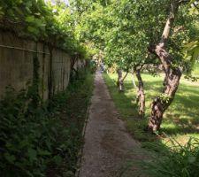 Le verger sur le coté entre pommiers et vignes