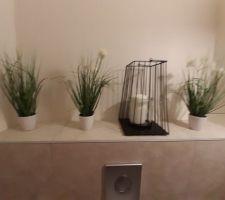 Les plantes du wc