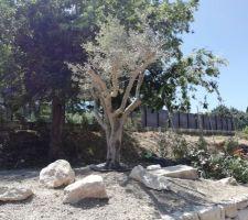 Les paysagistes sont à l'oeuvre (olivier)