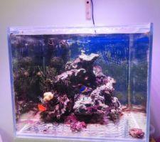 Aquarium d'eau de mer, 6 ans et demi après son installation