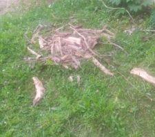 Débris végétaux retirés