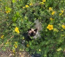 Notre deuxième chat dans les plantes du jardin