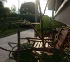 L'autre kiwi pret a investir la terrasse couverte !!