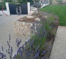 Plantation de lavandes en bordure du mur en pierres sèches