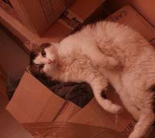 Photo d'un chat clairement traumatisé par le déménagement imminent