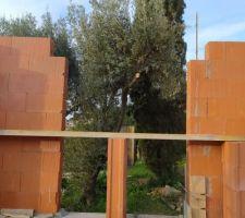 L'une des ouvertures du séjour donne directement sur l'olivier (qui entrait dans la maison mais interdiction de le déplacer au permis de construire donc j'ai coupé un bout)