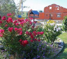 Lagerstroemia indica 'Red imperator' (pépinière Desmartis à Bergerac), géranium vivace 'Rozanne', hibiscus syriacus 'Pinky spot'
