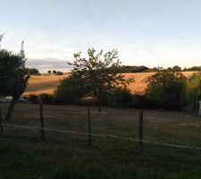Terrain côté est, après la barrière.