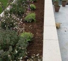 Plantations jardinière