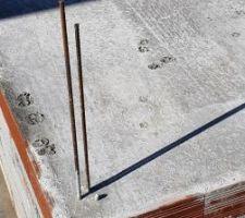 Lequel des 5 chats plaide coupable pour ces traces de papattes sur la dalle du pool house ??