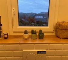 Des petits cactus pour un peu de verdure dans les WC