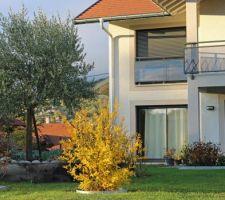 Le jaune du grenadier à fleurs et le gris de l'olivier
