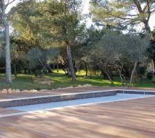 la maison entouree d oliviers