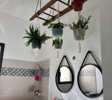 On profite de la hauteur sous plafond pour créer un espace dédié aux plantes. Du coup on atténue également la résonance ! Récupération d?une vieille échelle et voilà le résultat...