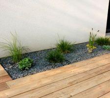 une des plates bandes de la terrasse graminees et sedum