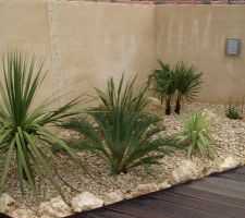 Coin des plantes exotiques... sans soleil!