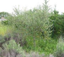 marcel perdu dans la vegetation