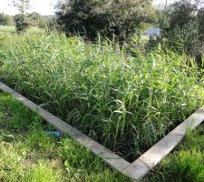 nouvelle jeunesse pour ma maison jardin d assainissement phyto epuration en place travaux finis