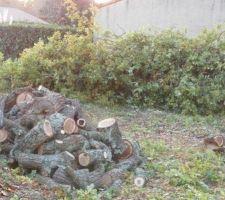 Le chêne débité
