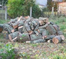 Le chêne abattu