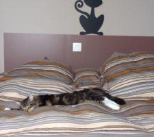 Mon chat gobert :-)