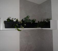 Composition plantes murales