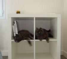 Détournement de l'étagère expedit !!! Mais non les chats, ça n'est pas un arbre à chats !!!