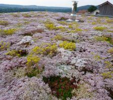 le toit vegetalise liner sur volige bois puis pouzoulan sur 10cm puis sedum plante la premiere annee un tapis de fleur ou les abeilles viennent s en donner a coeur joie