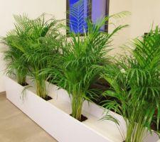 Création d'une jardinière, manque des galets et des plantes plus petites entre les arecas !