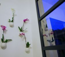 Les orchidées :) (pots Ikea)