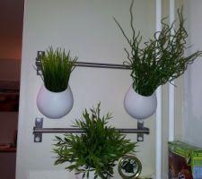 Nouvelles plantes dans la cuisine