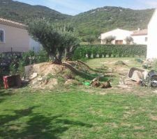emplacement piscine tradi hors sol au niveau des oliviers