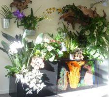 Plantes et aquarium