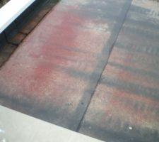 Champignons sur notre toit terrasse