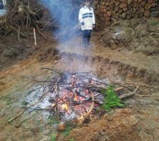 Élagage de la haie de thuyas