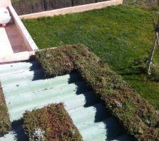 Notre toiture Végétalisée