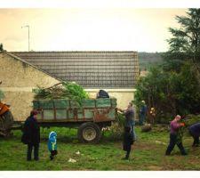 Evacuation des thuyas coupés