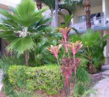 On a déjà les palmiers et le schefflera pour délimiter le massif. avec du paillage de couleur un peu bordeau, ça change.