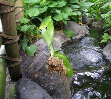 Des orchidées qui se posent où elles veulent, le bonheur, nous elle sera dans la salle de bain